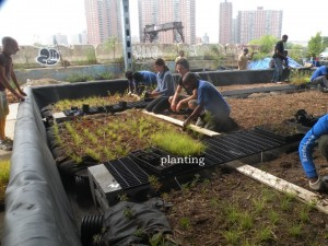 5000 Native Plants capture pollutants