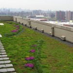 Bx_County_GreenRoof_Summer08_withskyline.JPG (456 KB)